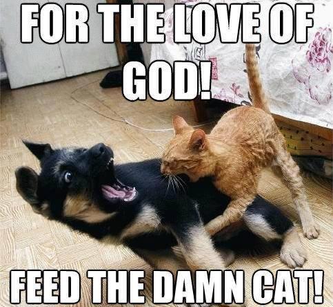 Cat bites dog Meme